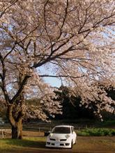 狩宿の下馬桜~♪