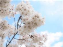 信州の春(1)