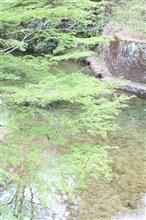 新緑の「愛知県民の森」