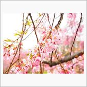 信州の春(2)