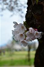 4月15日 雨模様な日曜日、おはよ~♪
