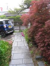 春雨と我が家の庭先