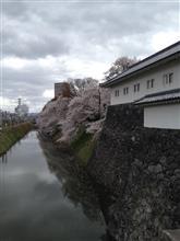 さくら  サクラ  桜  SAKURA