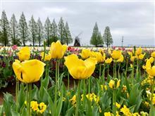 あけぼの山農業公園:千葉県