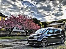 山桜と‼️
