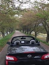 葉桜のトンネル(^-^;
