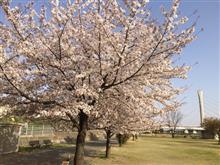 春色٩( ᐛ )و