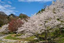 長野の桜からの大阪オフ