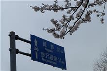 春爛漫♬ 北信濃桜便り🌸
