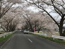 南方 千本桜🌸