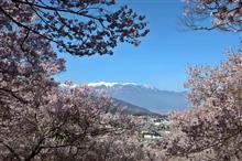 桜前線を追いかけて〜高遠から八ヶ岳へ