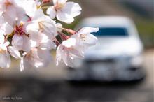 桜便り2018 vol.4