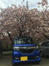桜のボンボン