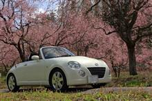 桜、オープンドライブ♪ ~季節の移ろい、心もよう~