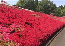 ツツジの絨毯と散策路の花たち