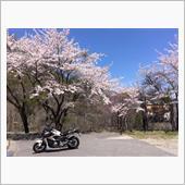 桜みっけ〜