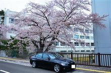 I・DA・TENの桜シリーズのFINALE。(^。^)