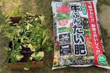 今年の野菜