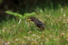 GW前半は、夏鳥との出会い求めて鳥撮り三昧!!