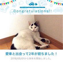 愛猫と出会って2年!