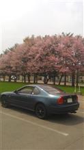GWの十勝に桜が咲きました。