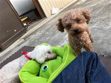 愛犬テディ 天に旅立ちました