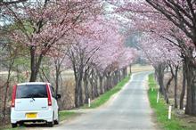 桜さがしへ