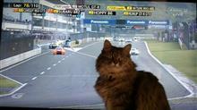 愛猫、邪魔をする