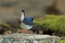 GW後半は、聖地Y峠で野鳥撮影