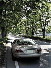新緑のKAZO欅ストリートをXK8で