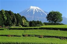 5月の富士山周辺にお出かけ