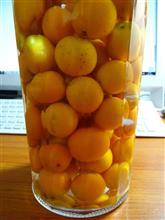 金柑の果実酒