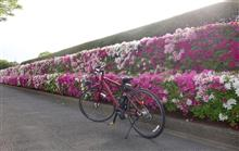 My bicycle & Flowers... 作家 古川 薫さんを悼む... New PC for my wife...