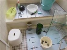 水槽の掃除