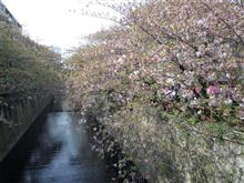 4月3日東京の桜は葉桜に近かった