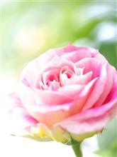毎年恒例の石橋文化センターの薔薇フェア♪