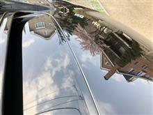 北海道にも桜が( ・▽・)♪
