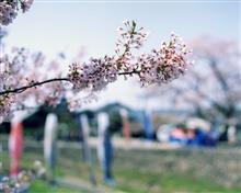 バケペンで撮った春