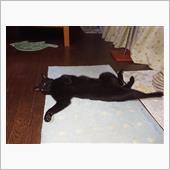 猫の「ゴロゴロ・・・」の仕組 ...