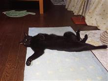 猫の「ゴロゴロ・・・」の仕組みは謎?