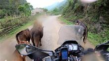 ベトナムで内視鏡検査