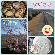 ラスト牡蠣&河津桜