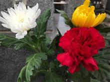 カーネーションと菊