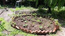 今年は復活!家庭菜園。