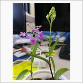 咲きそうで咲かず(^_^;) ...