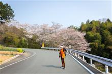 2018 Sakuraまつり