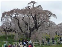 南東北の桜めぐり