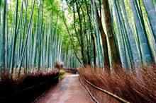 マナーはしっかり守ろうか… 嵐山の竹林の竹が傷つけられる…