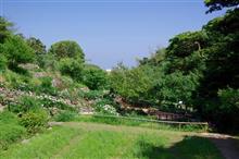 散策をしながら... 白野江植物公園  人生は...