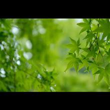 雨に濡れる新緑を眺めに。